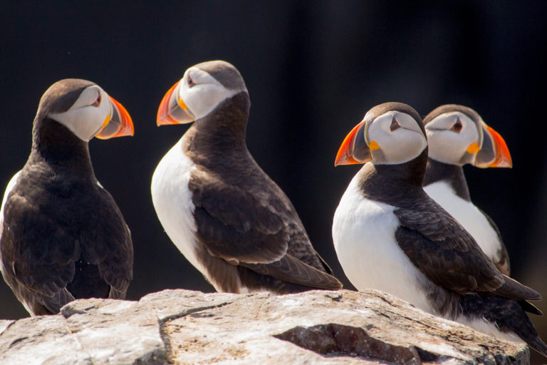 nordkapp   north cape   norway   puffins   Gjesvæstappan   midnight sun   travel   the man in the front seat   bwd vacations